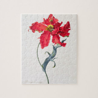 Tulip: Perroquet Rouge Jigsaw Puzzle