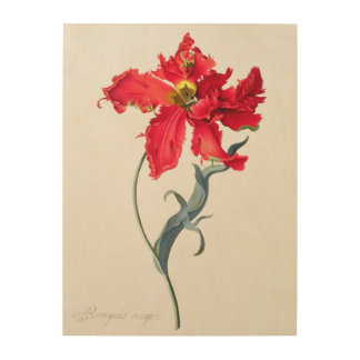 Tulip: Perroquet Rouge Wood Wall Art