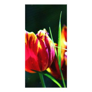 Tulip Photo Cards