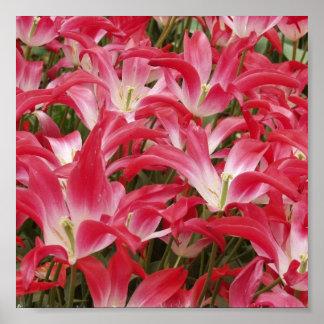 Tulip Photo Poster Print