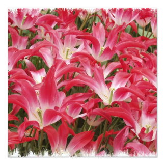 Tulip Photos Invitation