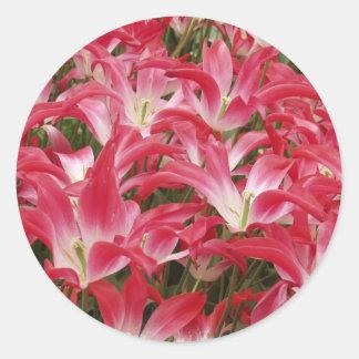 Tulip Photos Sticker