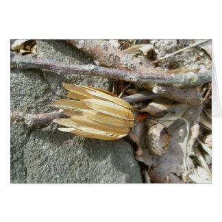 Tulip Poplar Seedhead Note Card