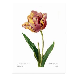 Tulip Postcards