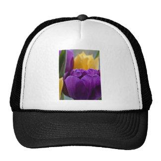 Tulip Purple Cap