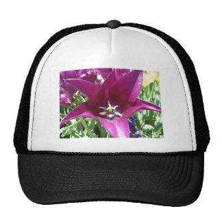 tulip,purple star tulip hats