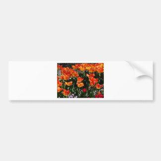 tulip red and orange bumper sticker