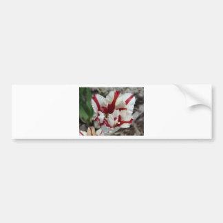 tulip red and white fringe bumper sticker