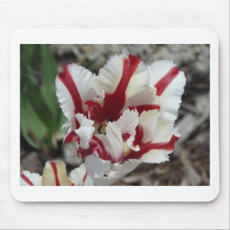 tulip red and white fringe mouse mat
