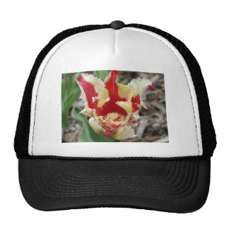 tulip,red and yellow fringe cap
