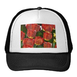 tulip,red cap