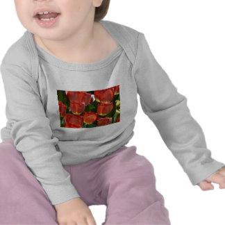 tulip,red tee shirts