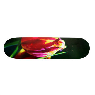 Tulip Skate Boards