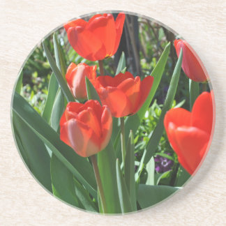 Tulip Summer Sandstone Coaster