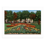 Tulip Time Holland, Michigan Post Cards