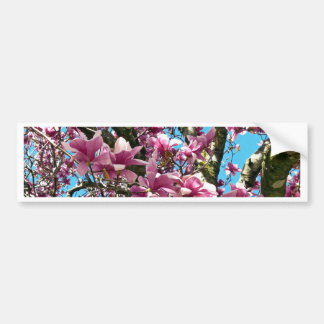 Tulip Tree Bumper Sticker
