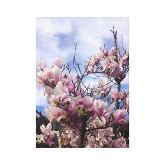 Tulip Tree Flowers. Magnolia soulangeana Canvas Print