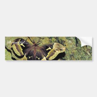 Tulip-tree silk moth car bumper sticker