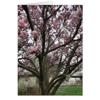 Tulip Tree Spring Has Sprung Card