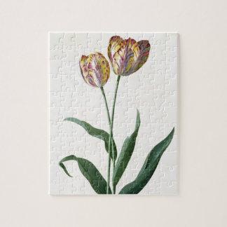Tulip Tulip Jigsaw Puzzle