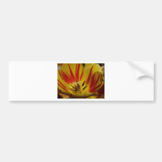 tulip,yellow and red bumper stickers