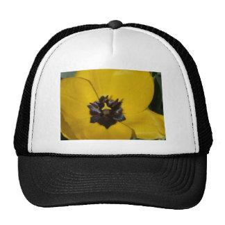 tulip, yellow hat