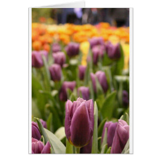 Tulip Zoom Greeting Card