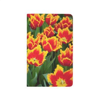 Tulipa Fabio, Keukenhof, Netherlands Journal