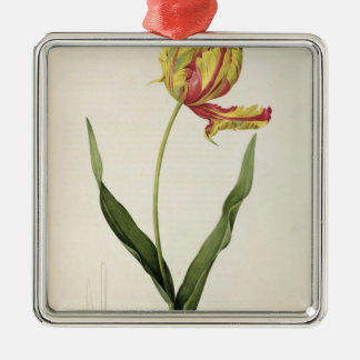 Tulipa gesneriana dracontia, from 'Les Christmas Ornament