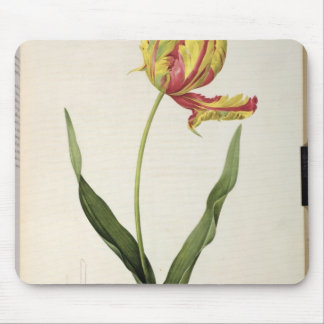 Tulipa gesneriana dracontia, from 'Les Mouse Pad