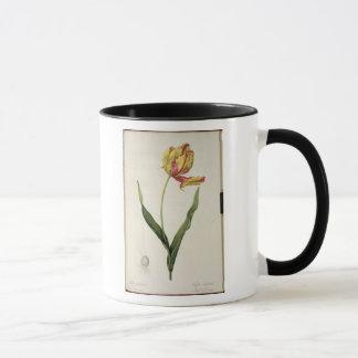 Tulipa gesneriana dracontia, from 'Les Mug
