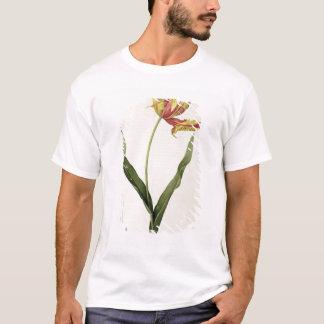 Tulipa gesneriana dracontia, from 'Les T-Shirt