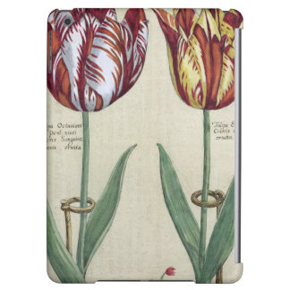 Tulipa Octaviani del pont, and Tulipa Elegant, fro