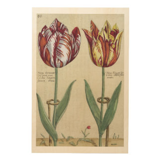 Tulipa Octaviani del pont, and Tulipa Elegant, fro Wood Wall Decor