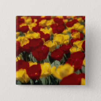Tulips 15 Cm Square Badge