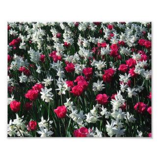 Tulips 16 Photo Print
