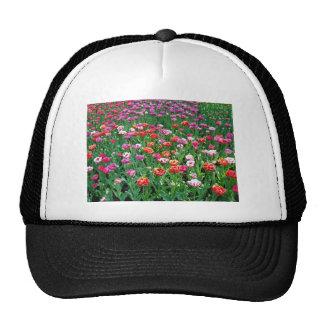 Tulips #1 mesh hats