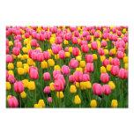 Tulips 1 Print