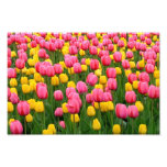 Tulips 1 Print Photograph