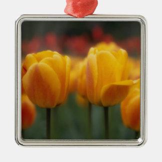 Tulips 2 christmas ornament