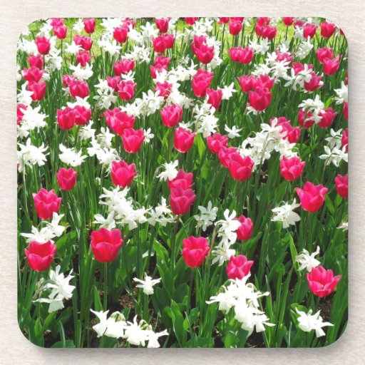 Tulips.#2 Coaster