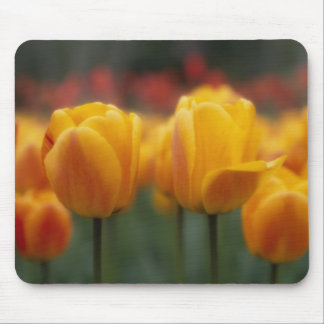 Tulips 2 mouse pad
