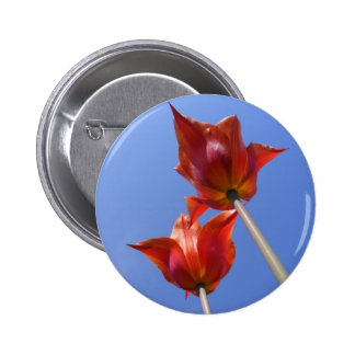 Tulips 2 Worms eye view button