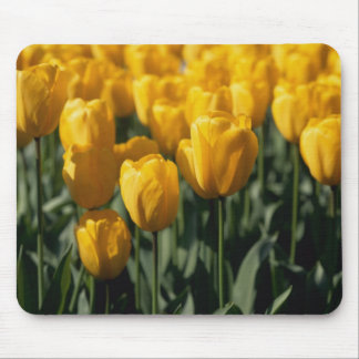 Tulips 3 mouse pad
