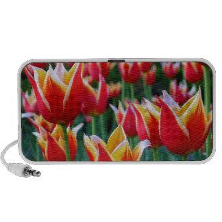 Tulips 3 Speaker