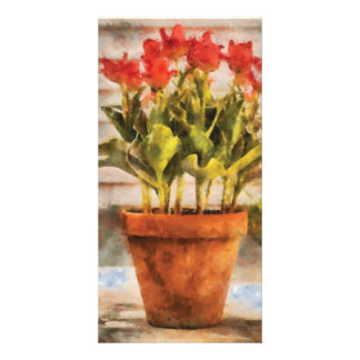 Tulips - A pot of Tulips Photo Greeting Card