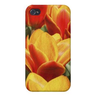 Tulips abound in Keukenhof Gardens, Holland. iPhone 4 Cover