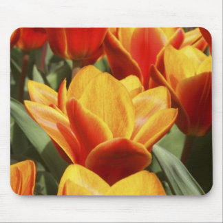 Tulips abound in Keukenhof Gardens, Holland. Mouse Mat