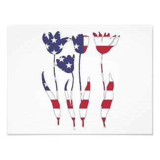 "Tulips ""American Flag"" Photograph"
