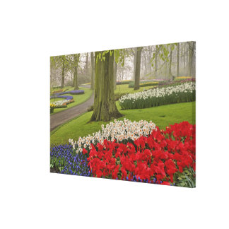 Tulips and daffodils, Keukenhof Gardens, Canvas Print